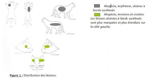 Un cas de Complexe Granulome Eosinophilique félin répondant à la ciclosporine