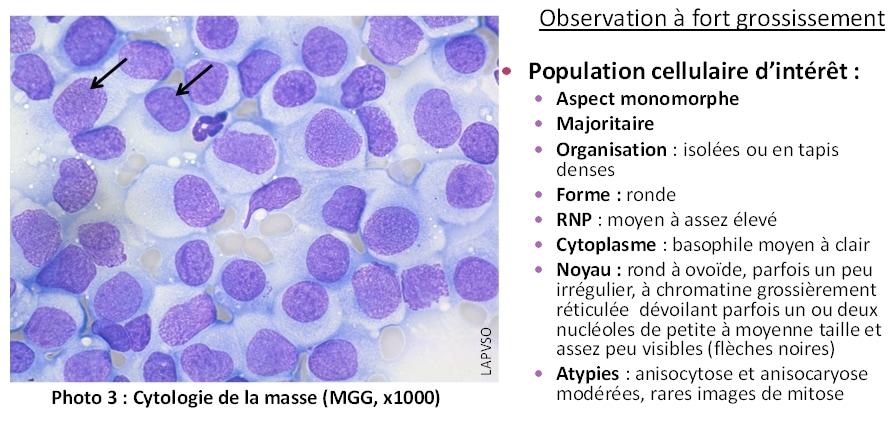Cas de cytologie clinique : Un cas d'histiocytome canin