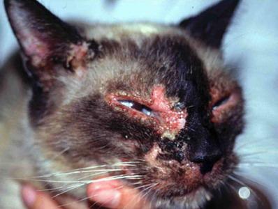 Dermatoses auto-immunes