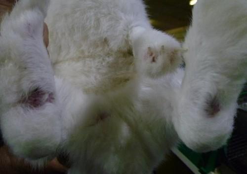 Formation continue et Informations en Dermatologie Vétérinaire